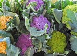 Сорти цвітної капусти