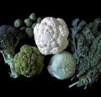 Сорти капусти брокколі