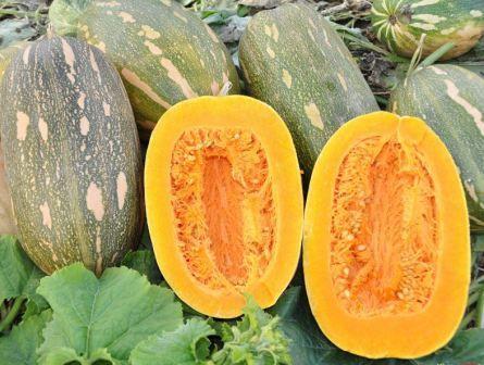 гарбуз вітамінна фото