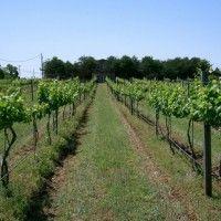 Складання плану ремонту виноградників