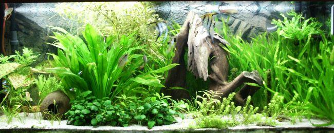 Поради початківцям по догляду за акваріумом і рибками
