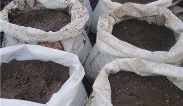 Фото мішків підготовлених для посадки міцелію