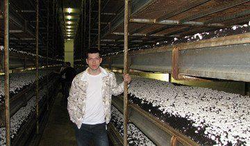 Вирощування грибів шампіньйонів на полицях, pokeroff.ru