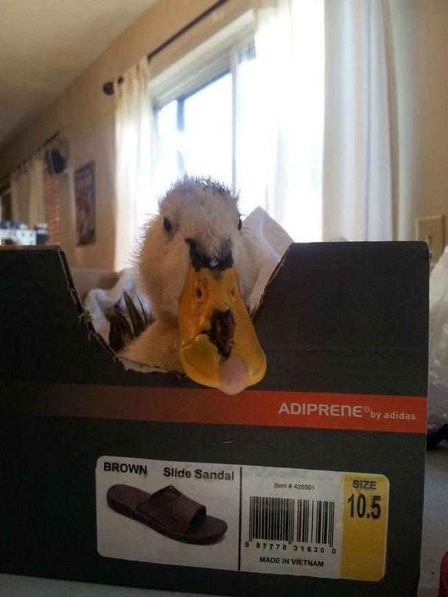 порятунок качки