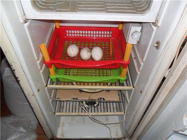 Інкубатор, зроблений власноруч з холодильника