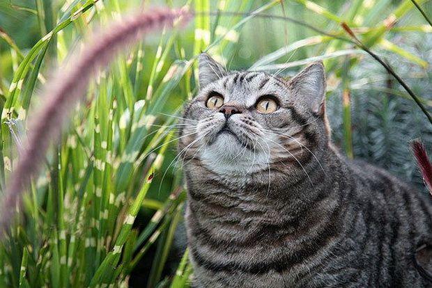 Засоби від бліх і кліщів для кішок: вибираємо найкраще!
