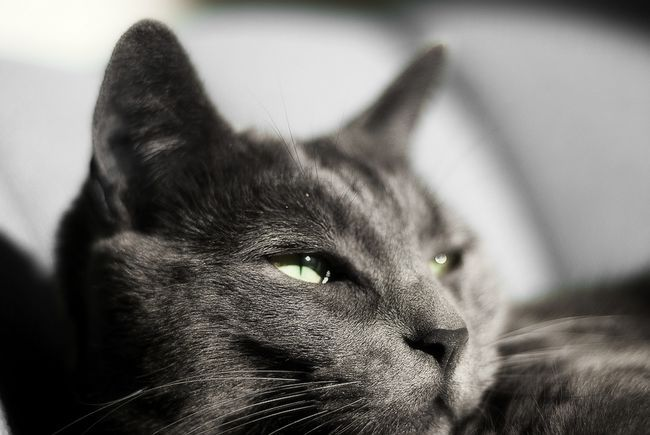 Засіб від бліх у кішок: як вибрати найбільш ефективним?