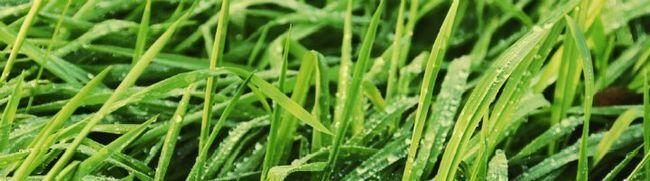Стрижка газону для створення зеленого килима перед будинком