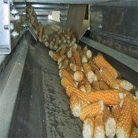 Сушка кукурудзи в качанах