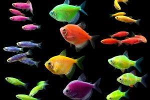 Сяючі рибки