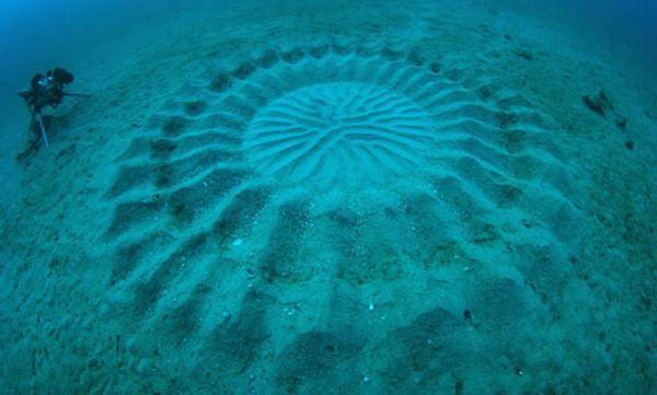 таємничі підводні`Круги на полях`