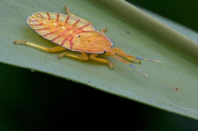 Таємне життя комах