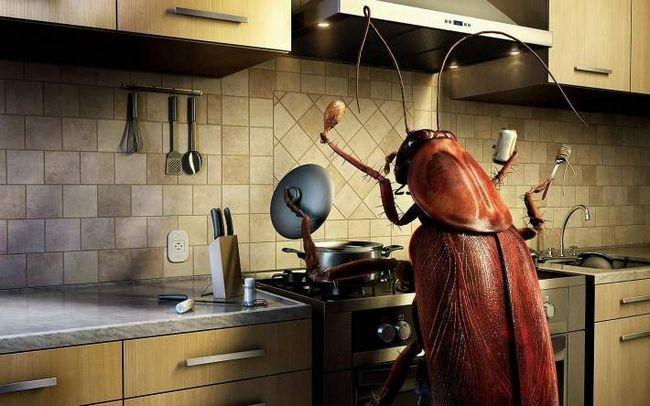 Гумористичне фото, де тарган зображений шеф-кухарем.