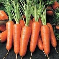 Технологія промислового вирощування моркви