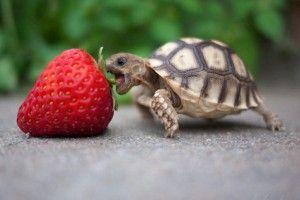 Тераріуми для сухопутних черепах