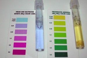 Тести для акваріумної води