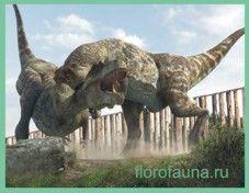 Тиранозавр / tirannosaur