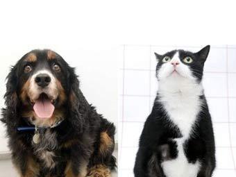 Домашні тварини, які страждають від надмірної ваги, візьмуть участь в спеціальному чемпіонаті Великобританії по схудненню