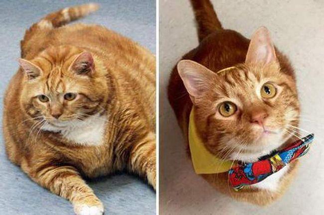 Кот схуд на 10 кілограм.