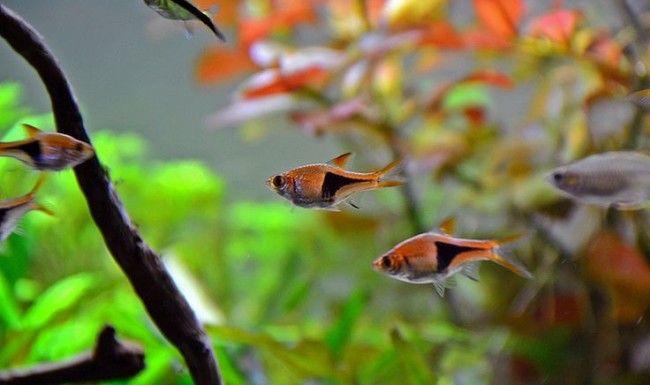 Рибки для початківців.