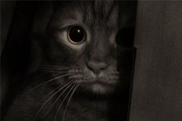Транспортування хворий або травмованої кішки