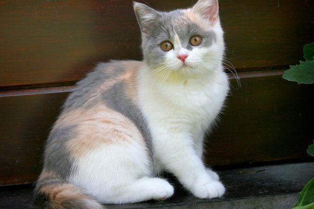 Боягузлива кішка