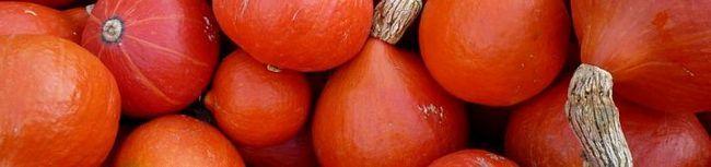 Гарбуз хоккайдо і інші відомі овочі - вибираємо кращі сорти на території рф!