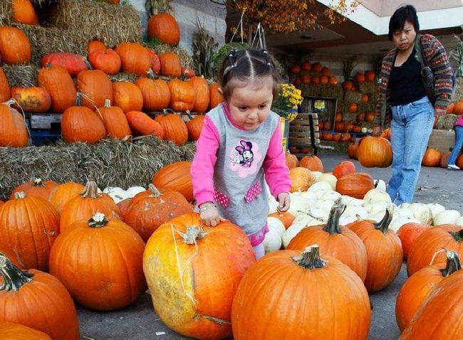 Дворічна Шейла Посадас з Чикаго вибирає потрібну гарбуз на ринку (Fresh Farms) в Чикаго 18 жовтня. (Nam Y. Huh, AP)
