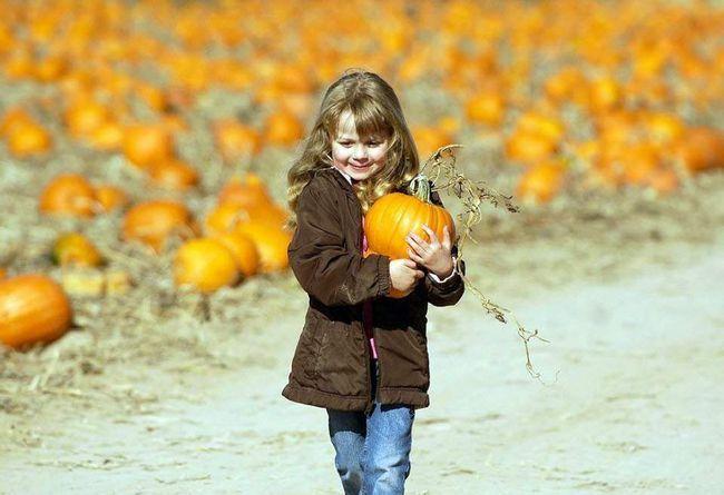 4-річна Дакота Магнусон з Бойса, штат Айдахо, несе гарбуз по сімейному гарбузовому полю 25 жовтня в Нампі, штат Айдахо. (Charlie Litchfield, Idaho Press-Tribune / AP)