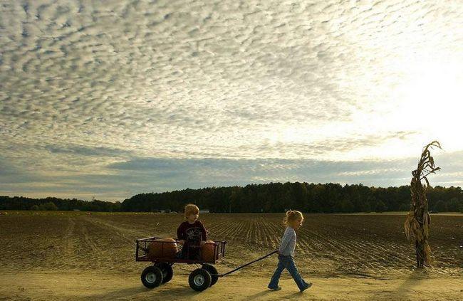 Дівчинка везе свого брата і кілька гарбузів на візку після відвідування гарбузової ферми 22 жовтня в Істоні, штат Меріленд. (Jim Watson, AFP / Getty Images)
