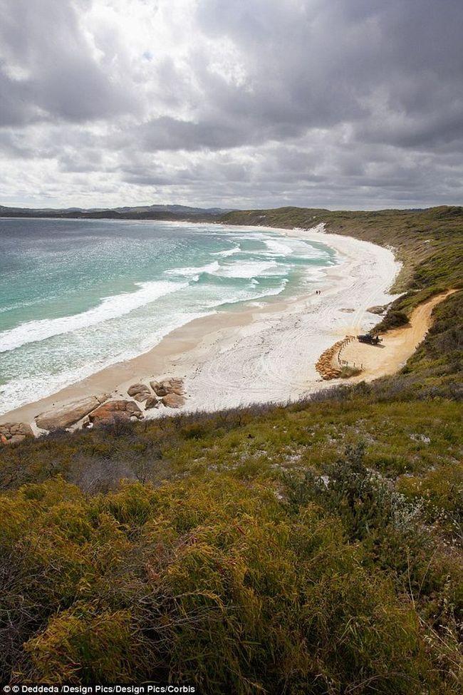 Біля берегів Австралії виловили найстарішу рибу в світі
