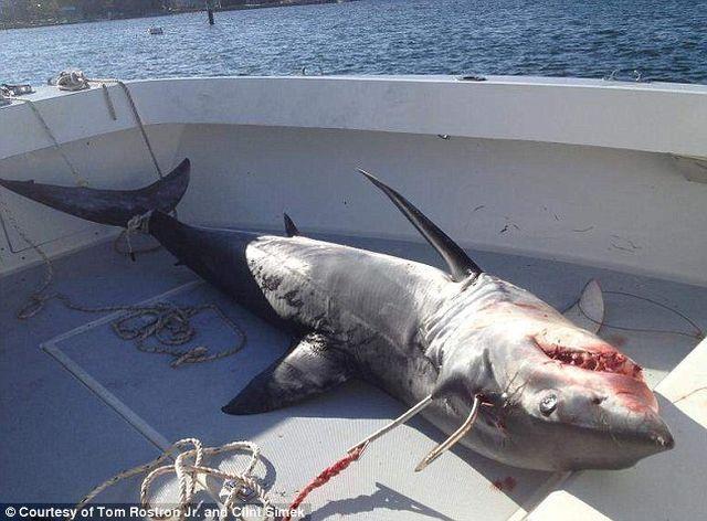 Акула сама стрибнула в човен до рибалок біля берегів США (фото: usatoday.com)