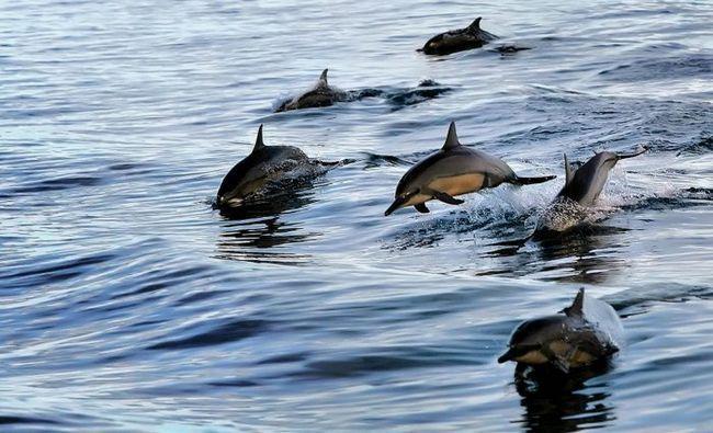 зграя дельфінів