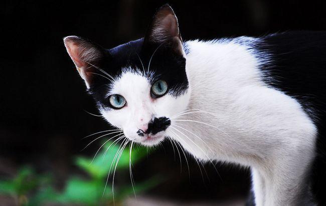 У кота блювота і понос: що робити
