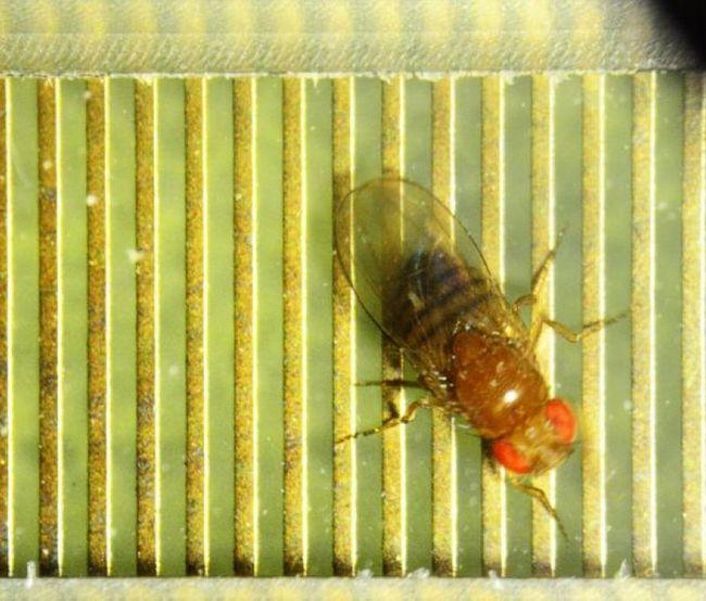 У комах виявили ознаки інтелекту