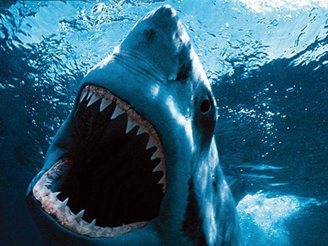 Акулам імпланти ні до чого.
