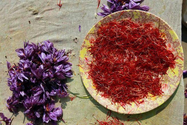 Збирання врожаю шафрану в Індії