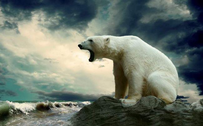 Білих ведмедів врятують олені і гуси.