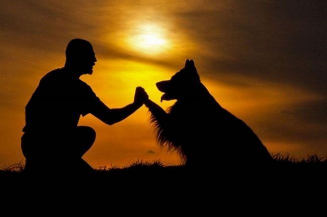 Можливо, саме дуже точне сприйняття людської мови зробило собаку кращим другом людини.