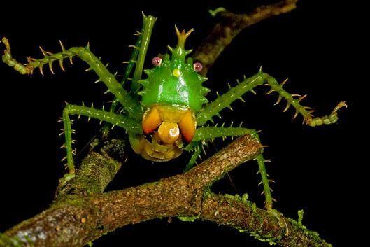 Вчені знайшли в лісах Еквадору нові види живих