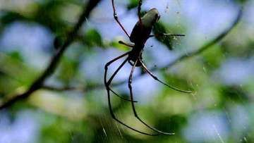 Вчені заново оцінили чисельність живих істот на землі