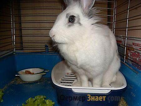 Білий кролик на лотку