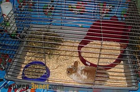 Кролик в клітці з лотком