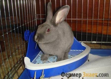 Сірий кролик в клітці на лотку