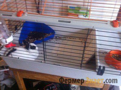 Кролячий лоток в клітці