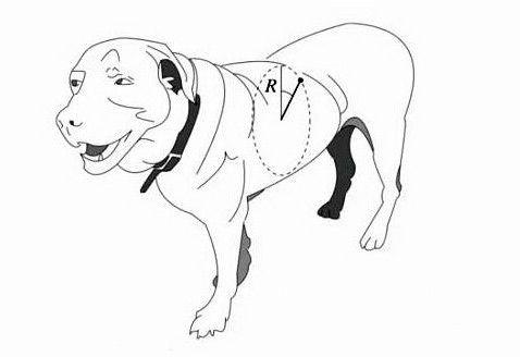 Вчені виміряли межа обертання мокрих собак