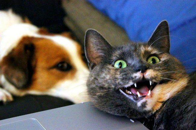 Вдала фотографія кішки несподівано допомогла зібрати гроші для притулків
