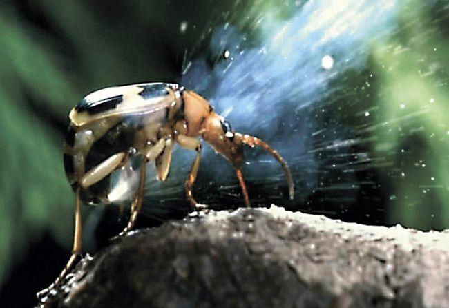 Дивовижні факти про незвичайних істот природи