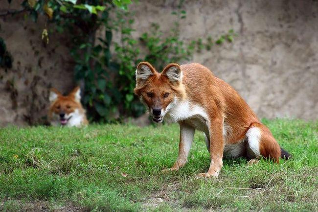 Дивовижні тварини нашої планети