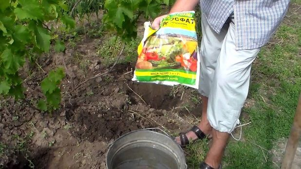 добриво винограду
